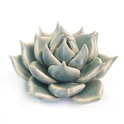 Coral 2 Succulent Flower