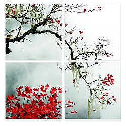 Autumn Branch Mounted Quadriptych Square Art Print