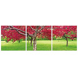 Cherry Blossoms Mounted Triptych Art Print