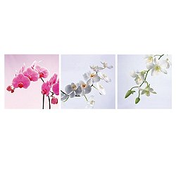 Assorted Orchids Mounted Triptych Art Print