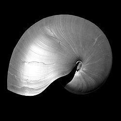Nautilus Twin I