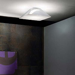 Beetle AP4-PL4 Wall and Ceiling Light