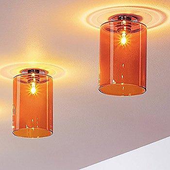 A pair of Orange Spillrays